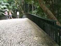 A atual passarela está no Trianon desde a década de 1960, quando Burle Marx e Clóvis Olga revitalizaram o parque, substituindo a antiga ponte de madeira por uma de concreto. Na revitalização do parque, as alamedas internas foram alargadas e pavimentadas com pedras portuguesas, em forma de mosaico. Parque Trianon, São Paulo. Imagem: Janaína Calaça.