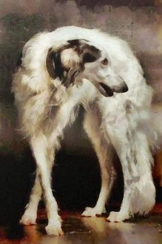 'The Borzoi Uturn' by Janice Maclellan.