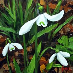 """Snowdrops No.1, new Journal Post for 7/4/2016 - Oil on panel, 6""""x6"""""""