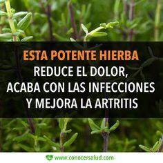 Esta potente hierba reduce el dolor acaba con las infecciones y mejora la artritis #salud