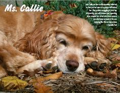 Those of us that own the 2015 Abandoned Angels calendar have the pleasure of enjoying Ms. Callie's beauty throughout the month of October. Do you have a dog that's calendar worthy? Now thru Tuesday, 10/6, we're auctioning off each month of our 2016 calendar to help raise funds for veterinary care. It's a great way of honoring your pet and giving back to a rescue at the same time. For auction rules and instructions or to place your bid now, please visit https://goo.gl/8ttmYK. Please repin!
