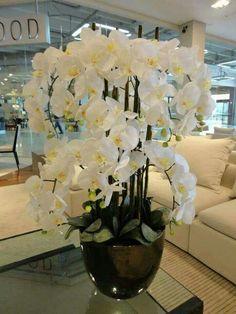 White phalaenopsis - My site Indoor Flowers, Exotic Flowers, Beautiful Flowers, Orchid Flower Arrangements, Orchid Centerpieces, White Orchids, White Flowers, Artificial Orchids, Phalaenopsis Orchid