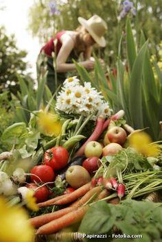 Quels traitements naturels utiliser pour un potager bio ?