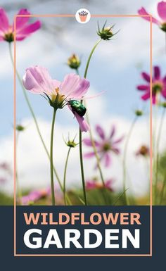 Wildflowers will attract many insects especially butterflies to your garden. Plant a wildflower prairie garden or meadow and add beauty to your garden with their colourful blooms. You will learn how to grow wildflowers from seeds, what kind of care wildflowers need, and much more! #wildflowers #gardening #attractinsects Vertical Garden Plants, Shade Garden Plants, Small Succulents, Succulents Garden, Gardening For Beginners, Gardening Tips, Prairie Garden, Hardy Perennials, Drought Tolerant Plants