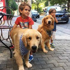 Golden Retriever Bom dia!! Hoje o café da manhã será aqui no @sto.pao !! Local Petfriendly !!  Good Morning!! A Petfriendly Breaksfast with Dad!! #Bob #Marley #AumigosDoBobEMarley #goldenretriever #goldenretrieverbrasil #goldenretrieverworld #puppy #puppiesofinstagram #goldensofinstagram #dogsofinstagram #petstagram #instapet #instapetbrasil #instaBobEMarley #petfriendly #sampa #sp #au #austore #curtirmaisjuntos by bob_marley_goldenretriever