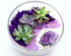 How to Care for Indoor Plants: Air Plants, Cacti, Succulents and Herbs - More Than A Buzz Succulents In Glass, Succulents Garden, Garden Plants, House Plants, Air Plants, Cactus Plants, Indoor Plants, How To Make Terrariums, White Plants