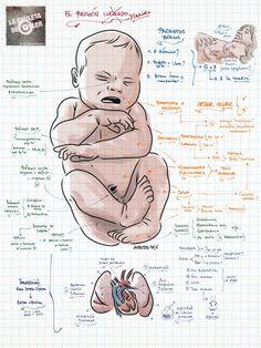 La Chuleta de Osler: Pediatría - El neonato y el período de transición