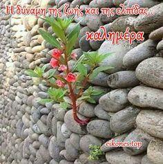 Εικόνες Τοπ:Όλη η ομορφιά χρωμάτων σε μια καλημέρα.! - eikones top Good Morning Happy, Good Night Image, Beans, Vegetables, Live, House, Motorbikes, True Words, Brother