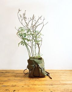 Hey anyone know which plant is this? I want to get one for my home! please comment this picture if you know, thanks!
