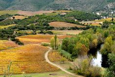 Autumn in south of France http://www.frenchessentials.com/french-curriculum-ebooks-homeschool-store
