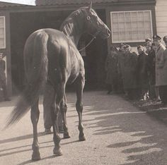 Man O' War parading at Faraway Farms 1920s back when horse racing wasn't a bunch of foals breaking legs from running too hard and too young :)