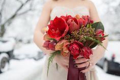 amaryllis bouquet in winter
