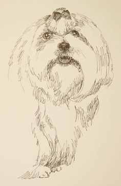 Maltese: Dog Art Portrait by Stephen Kline - art drawn entirely from the word Maltese. He also can add your dog's name into the lithograph. drawdogs.com :  His collectors number in the thousands from over 20 countries and every state in the US. Kline's dog art has generated tens of thousands of dollars for dog rescues worldwide. drawdogs.com