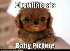 It is so cute! I love star wars