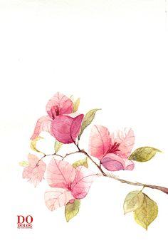 """《 三 角 梅 》、Dodolog原创插画、水彩、插画、手绘 Translation: """"Bougainvillia"""" Dodolog original watercolor hand-painted illustration."""