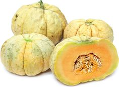 The Prescott Fond Blanc melon has a round, squat shape similar to that of a pumpkin and typically weighs five to ten pounds. Its exterior skin is segmented by vertical ridges and oftentimes covered in large lumpy warts. Like all true cantaloupe melons the skin of the Prescott Fond Blanc is smooth and lacks the netting that is signature to muskmelon varieties. When on the vine its skin will have a pale green hue and once ripe will turn creamy white to straw yellow in color. Its inner flesh…