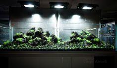 Acquario di dimensioni 200x50x50 allestito da Diego Marinelli con Uzan stone presso Moby Dick - Anagnina - Roma