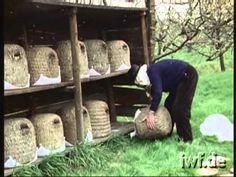 A quite wonderful #beekeeping video about #skep #beekeeping in Germany