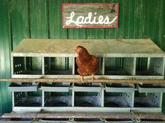 Chicken coop sign - Ladies !! Chicken coop fun!