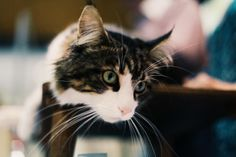 Cat's eyes #eastershow #cats #pets #animals