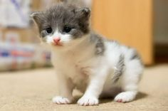 Cute kitten! from author:2356 on animal-photos.org #cats #kittens
