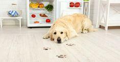 Questo alimento che tutti abbiamo in casa può essere letale per i cani!