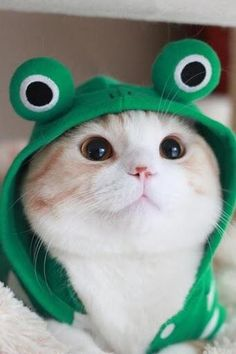 Kitty, so-so-cute-cats: i am frog not a cat miaow ...