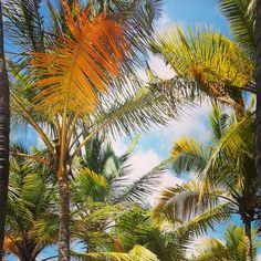 If emotionally vibrate with nature, perhaps it is because we share the same essence✌  Si vibramos emocionalmente con la naturaleza, es porque quizás compartamos la misma esencia✌ *** Photo: @aimeecarina #TheIsland #Margarita #Venezuela *** #beach #sky #spiritual #believe #coexist #spirituality #trust #peace #calm #mind #soul #hope #destiny #wisdom #compassion #thankful #knowledge #meditation #life #guidance #thinkgreen #gaia #mothernature #GaiaQueremosQueSeasFeliz