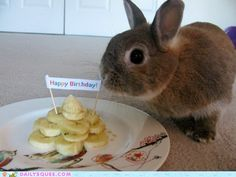 It's my birthday today. So here are 30 birthday buns. Funny Bunnies, Adorable Bunnies, Bunny Birthday, Happy Birthday, Birthday Cake, Super Cute Animals, Pretty Animals, Cute Buns, Honey Bunny