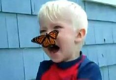 11-Aug-2014 8:06 - WHAA, ER ZIT EEN VLINDER OP M'N NEUS!. Wesley Thompson wou zijn kinderen iets bijbrengen over een van de wonderen van de natuur: de metamorfose. Hij deed dat met een rups. Na een...
