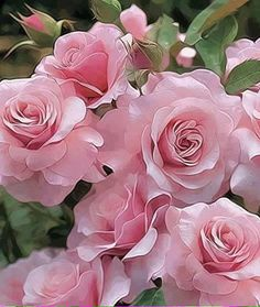 Pink Flowers : Rose – Our Lady Floribunda - Flowers.tn - Leading Flowers Magazine, Daily Beautiful flowers for all occasions Love Rose, My Flower, Pretty Flowers, Flower Power, Pink Flowers, Red Roses, Pink Petals, Colorful Roses, Cactus Flower