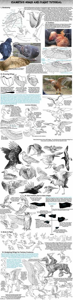 Ciameth's Wing Tutorial...wonderful...all you need to know of wings and birds