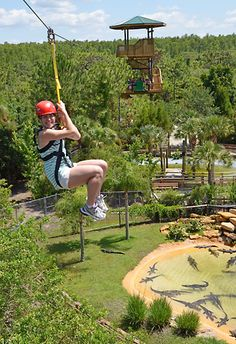 I CAN'T BELIEVE I NEVER KNEW YOU COULD DO THIS AT  GATORLAND!!!! I WANT TO GO RIGHT NOW!!!