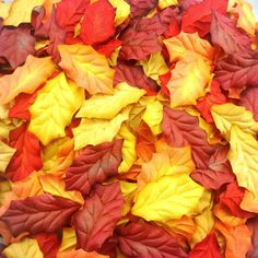 50 Mixed Tone Red-Yellow Holly Christmas Leaves by TheTime on Etsy
