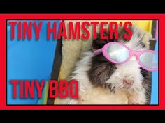 These Adorable And Tiny Hamsters Host A Barbecue And It's Summer Goals