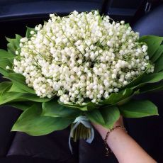 Lily of Valley Lily Of The Valley Flowers, All Flowers, Fresh Flowers, White Flowers, Beautiful Flowers, Beautiful Flower Arrangements, Floral Arrangements, Luxury Flowers, Spring Garden