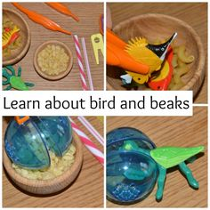 Learn about birds and beaks