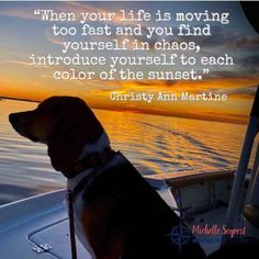 New Adventure Quotes, Adventure Travel, Insightful Quotes, Quotable Quotes, True Quotes, Inspirational Quotes, Sunset Captions For Instagram, Nautical Quotes, Sailing Quotes