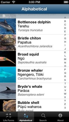 New Zealand Marine Life Application just released by Auckland Museum will be a g…, – Animal Kingdom Bryde's Whale, Life App, Bottlenose Dolphin, Mammals, Reptiles, Walking In Nature, Auckland, Marine Life, Natural World