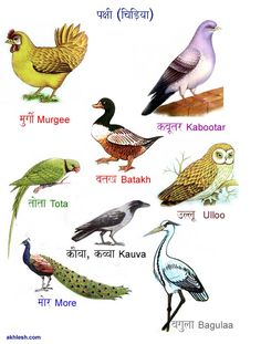 5 letter bird names birds chart chart bird and 20224