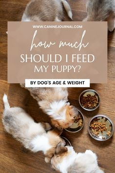 We discuss what a puppy's diet should consist of, how much a puppy should eat, and how often a puppy should be fed. We hope our puppy feeding guide will help you provide the proper diet for your pup. Nutrition Guide, Diet And Nutrition, Puppy Feeding Guide, Dog Ages, Guide Dog, Proper Diet, Homemade Dog, Dog Food Recipes, Puppies