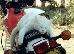 He had a long ride by BridesNightie.deviantart.com on @deviantART