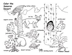 Good Desert Animals Coloring Page