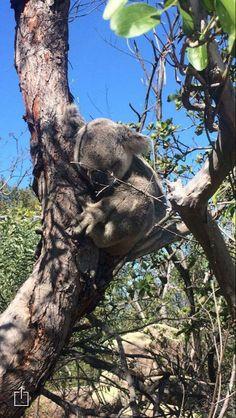 Magnetic Island, Queensland, Australia #Koalabear Australia Photos, Queensland Australia, Bear, Island, Places, Animals, Animales, Animaux, Bears