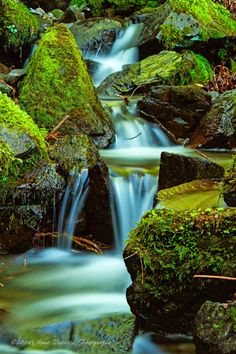 Nuno Valente Fotografia: Water color