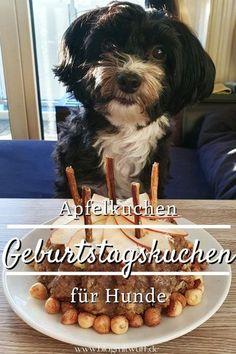 Pin2 Geburtstagskuchen Apfelkuchen für Hunde Dogs, Buffy, Animals, Community, Ice Cream For Dogs, Dog Snacks, Dog Food, Birthday Cakes For Dogs, Dog Care