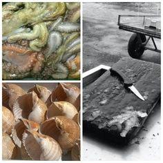 #portosantospirito seleziona il miglior pesce del pescato locale