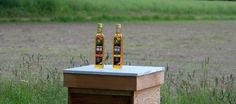 Koolzaadolie; Goud uut Hollandse polders | Lekker Tafelen