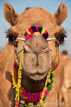 """C'mere lil' Camel... I want to knit your fur""   love, Beatricey1  Decorated Camel by Nilanjan Bhattacharya, via Dreamstime"