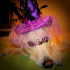 Golden Gracie Witch